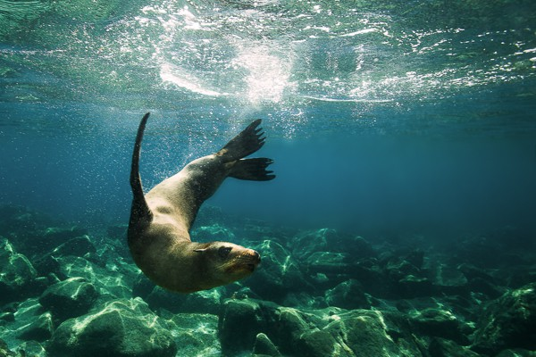 The Sea Lions of La Paz